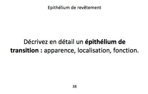Epithelium2